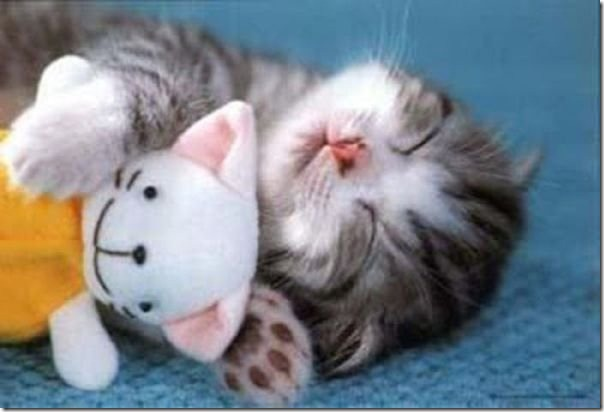 cats-stuffed-animals-8