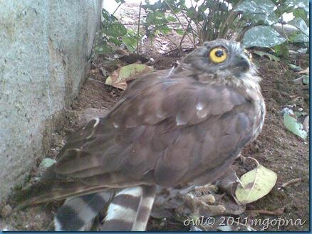 animal,bird watching