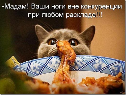 kotomatritsa_8J