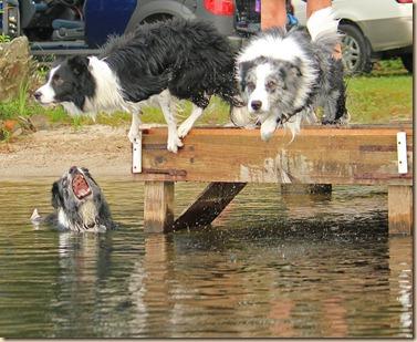 Dogs-Lake-070312 (77)e