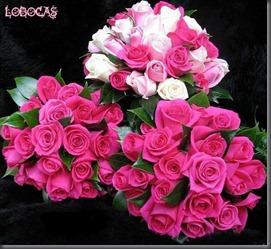 rosas-LoBocAs-9008