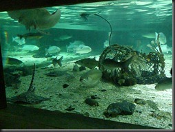 Sea Life Centre 020