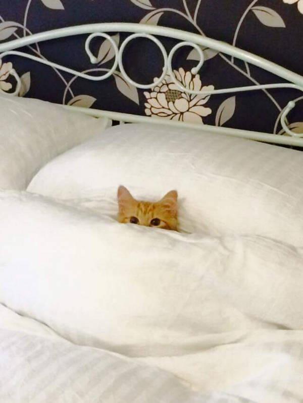 Os gatos não são muito bons em esconde-esconde 15
