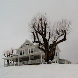 In The Snow by Delores Mills - Buildings & Architecture Homes (  )
