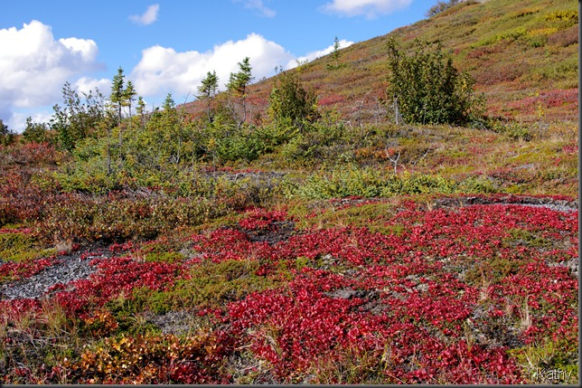 Bear Berry on the Tundra