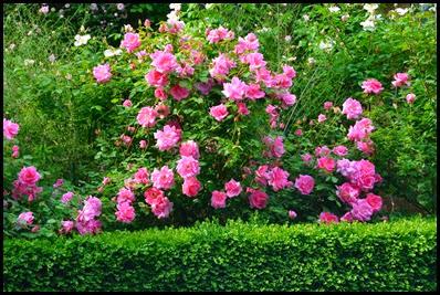 carefree beauty