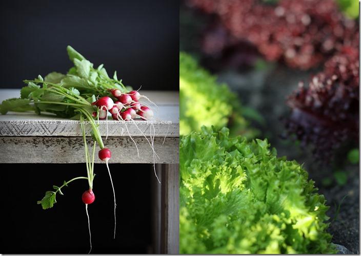 Warzywa z mojego tarasu3