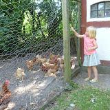 Besøg på åbent landbrug i Osted, med høns og køer.