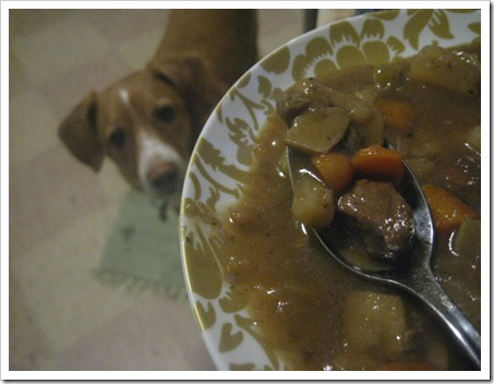 beef stew_max likes it....