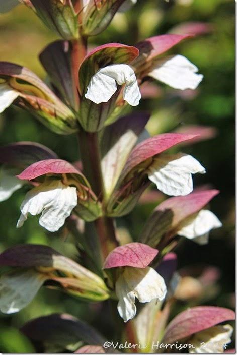 3-flower-spikes