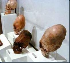 cranios-alongados