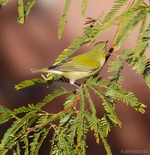 11. life bird 429-kab