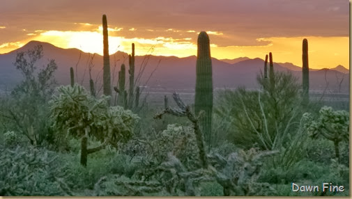Saguaro NP West_107