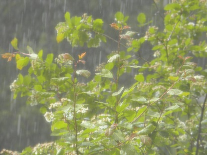 rain storm 5