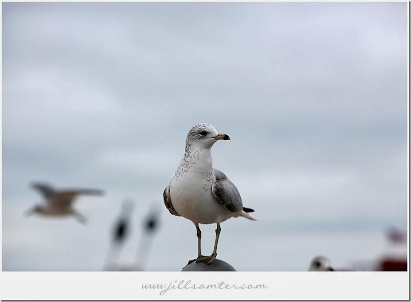 birdstand