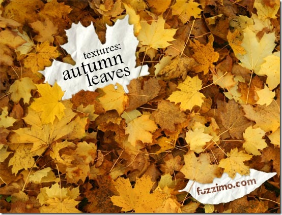 fzm-autumn.leaves.textures-01