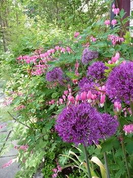 027 Allium aflatunense Lamprocapnos spectabilis Daniel Grankvist
