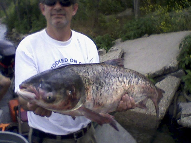 In this 22 June 2010 file photo provided by the Illinois Department of Natural resources, a 20-pound Asian carp is held after being caught in Lake Calumet, about six miles downstream from Lake Michigan. A scientific report released Thursday, 4 April 2013 says at least some Asian carp probably have reached the Great Lakes, but there's still time to stop them from becoming established. Photo: Illinois Department of Natural Resources / AP Photo