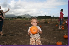 pumpkin patch 058