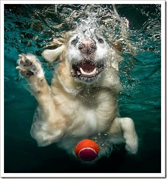 Amazing-photos-of-swimming-dogs-9581