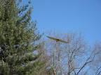 I saw the gigantic four-foot wingspan of a red tailed hawk.