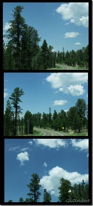 02 Jacob Lake Lookout Tower SR67 N Kaibab NF AZ collage (460x1024)