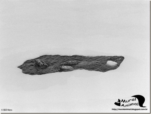 milagre-baleias (2)