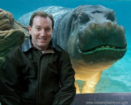 50_Funniest_Animal_Photobombs_Of_All_Time_11