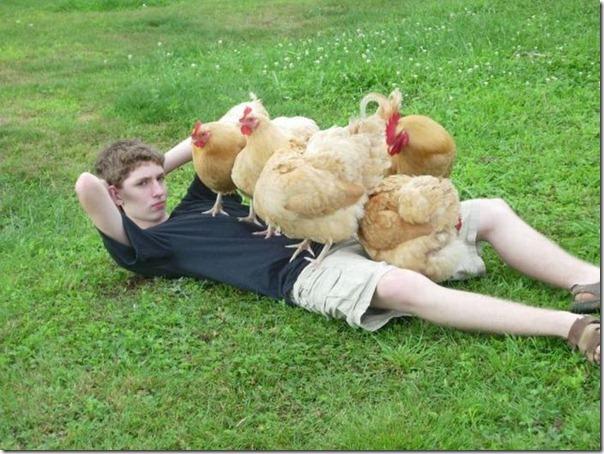 O rei das galinhas