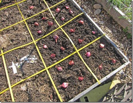 Growing Garlic In West Virginia