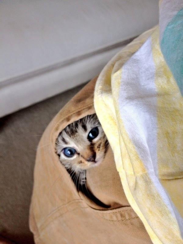 Os gatos não são muito bons em esconde-esconde 29