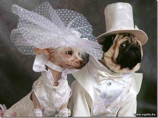 gatos y perros vestidos de novios | todo enamorados
