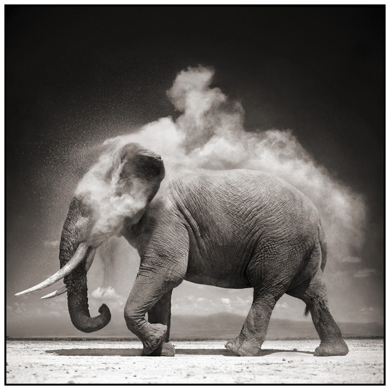 9 Elephant With Exploding Dust