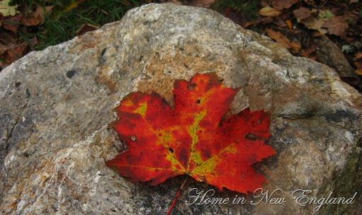 Fall 410