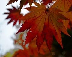 2011-10-15 Fall Lena 010