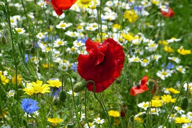 WW1 Полевые цветы
