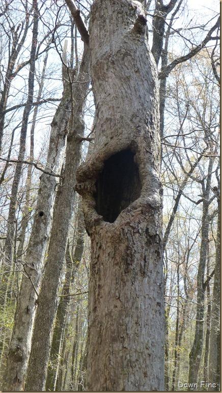 Beidler Forest_132