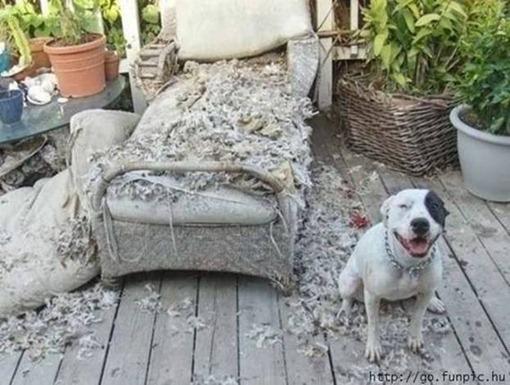 Двенадцать диванчиков проверил, а обещанных  костей так и не нашел...