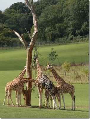 marwell zoo 032