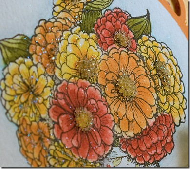 DPK_SneakPeek_Zinnias_orange_closeup