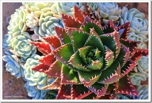130928_SucculentExtravaganza_48_thumb