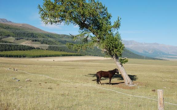 Tianshan - Le cheval et l'arbre penché
