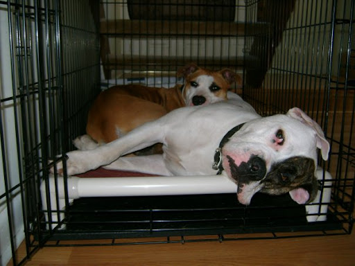 Donating a bed is also a great way to acknowledge an animal-loving-friend or a pet who has passed.