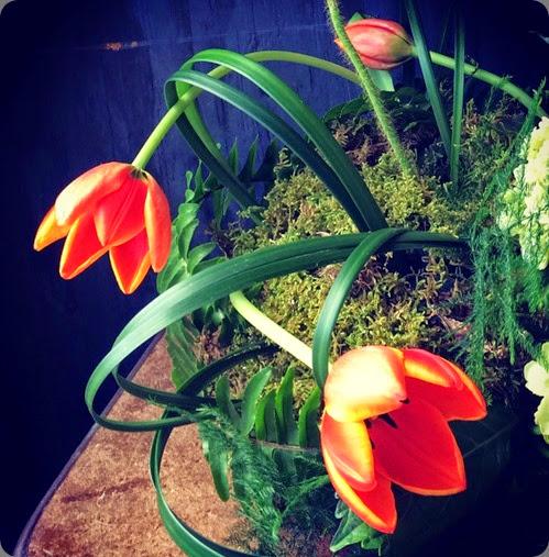 tulip hey julianna IMG_2267
