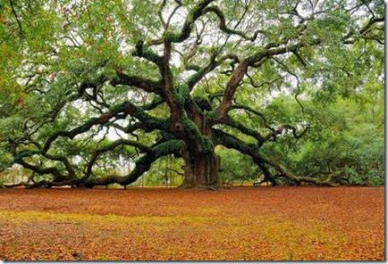 TreeswitMA29079731-0011