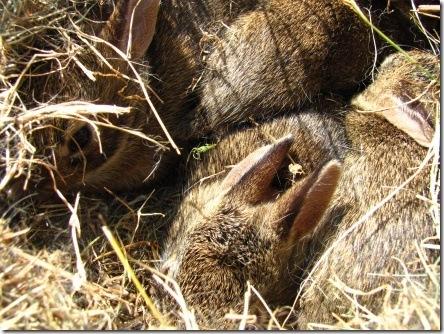 bunny_eyes