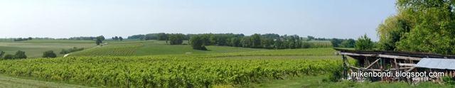 Vines 28 April 2011