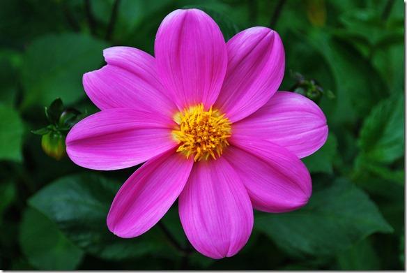 Flower 004-CC3