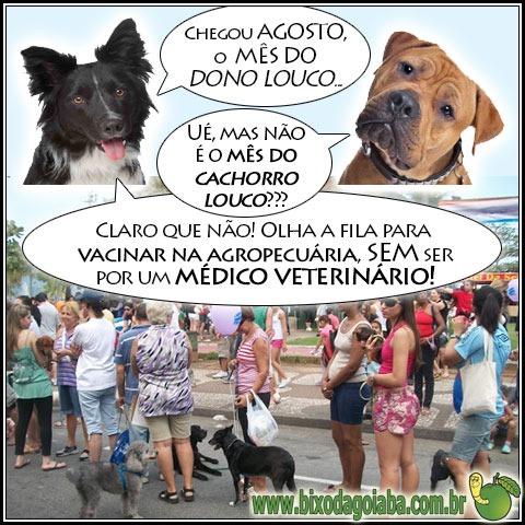Agosot: o mês do cachorro louco ou o mês do dono louco?