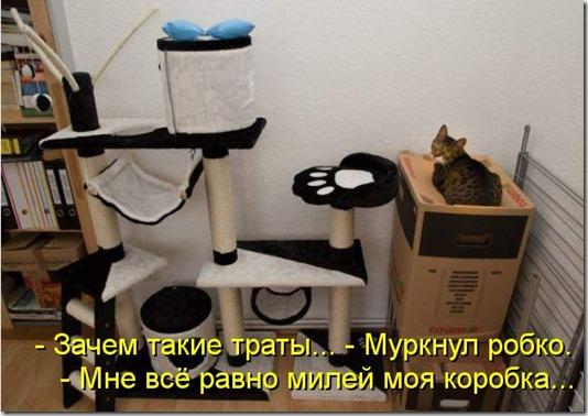 kotomatritsa_a8